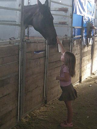 Horses at the fair 001