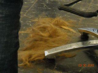 Haircut! 005
