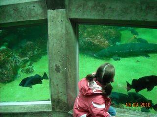 Aquarium 024