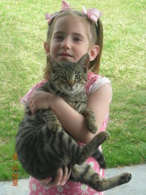 Sarafina_the_cat_002_2